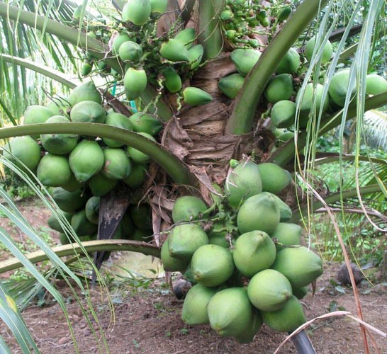 production of new types of fruit helps farmers earn additional income hinh 18