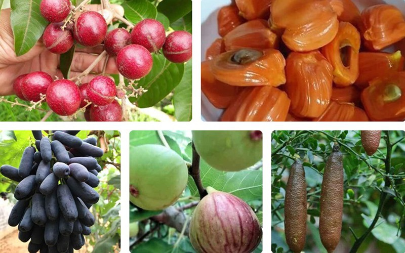 production of new types of fruit helps farmers earn additional income hinh 1