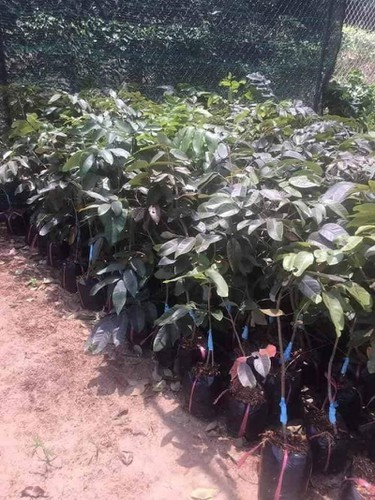 production of new types of fruit helps farmers earn additional income hinh 6