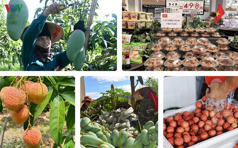 vietnamese fruit increasingly popular among foreign consumers hinh 1
