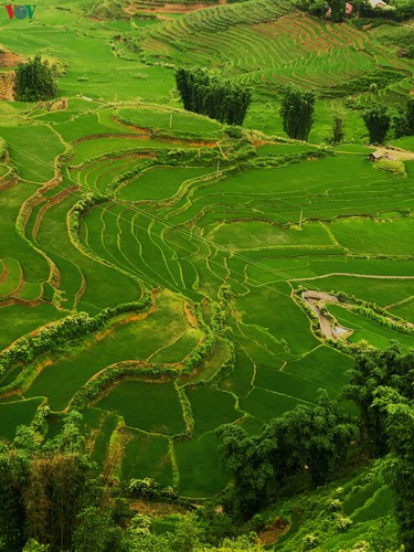 romantic valley seen from fansipan cable car hinh 5