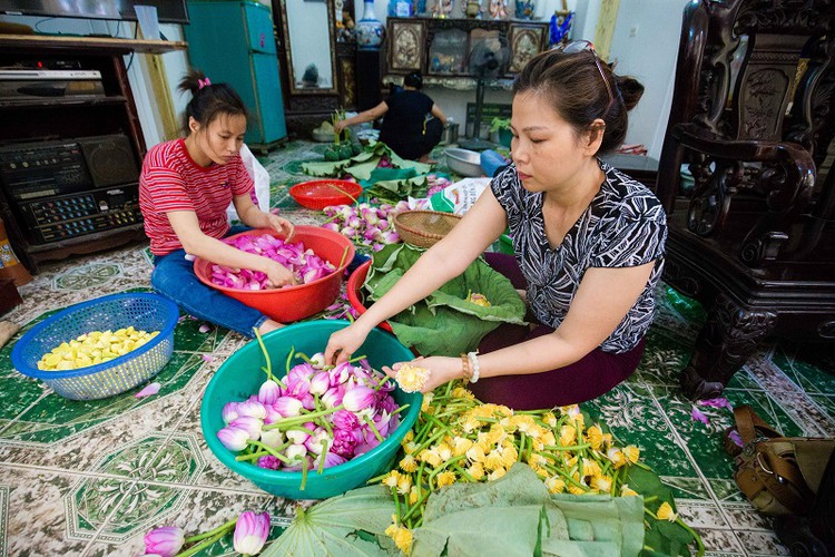 how hanoi's lotus-scented tea is made hinh 4