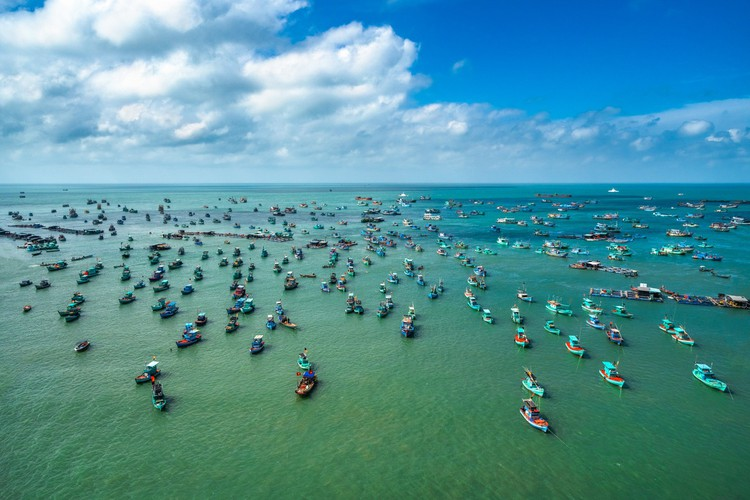 leading vietnamese locations to view coral reefs hinh 1