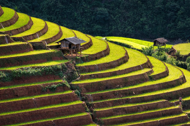 mu cang chai appears picturesque through lens of foreign photographers hinh 11