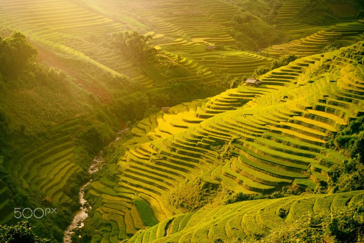 mu cang chai appears picturesque through lens of foreign photographers hinh 13