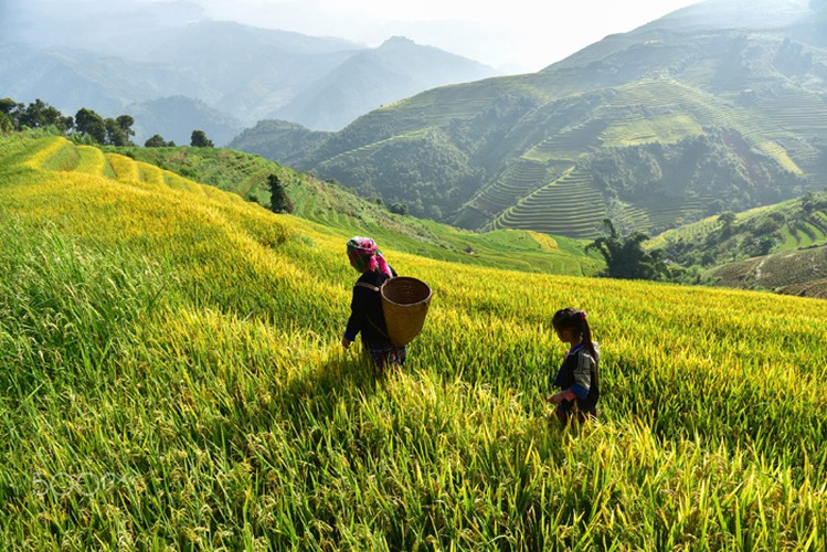 mu cang chai appears picturesque through lens of foreign photographers hinh 2
