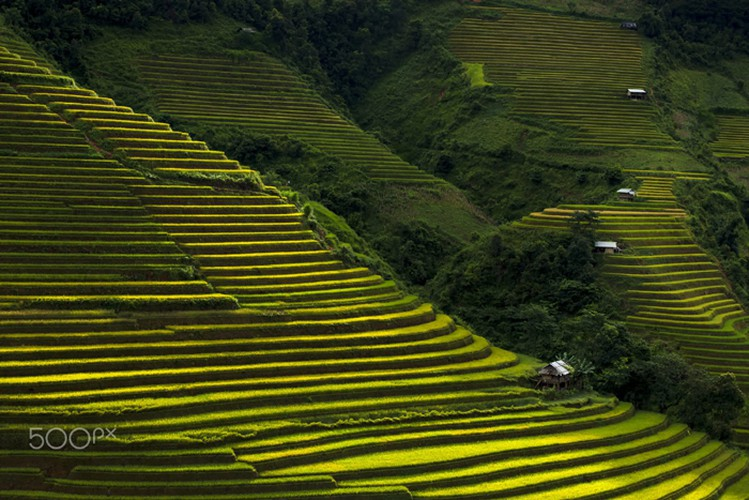mu cang chai appears picturesque through lens of foreign photographers hinh 7
