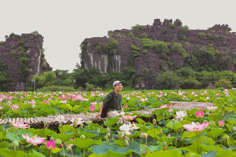 beautiful lotus ponds in ninh binh become hot summer check-in spot hinh 4