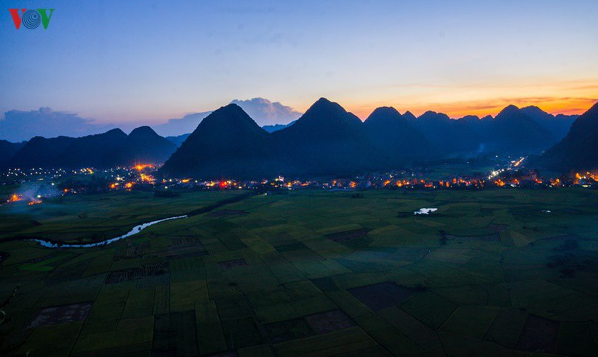 bac son rice fields turn yellow amid harvest season hinh 10