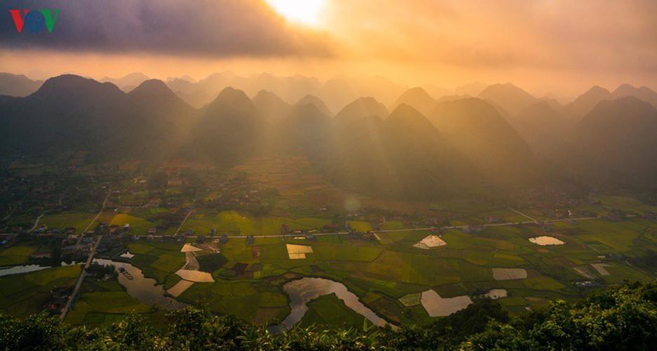 bac son rice fields turn yellow amid harvest season hinh 11