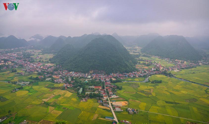 bac son rice fields turn yellow amid harvest season hinh 15