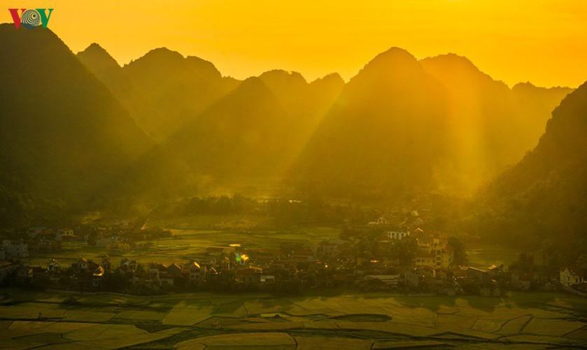 bac son rice fields turn yellow amid harvest season hinh 6