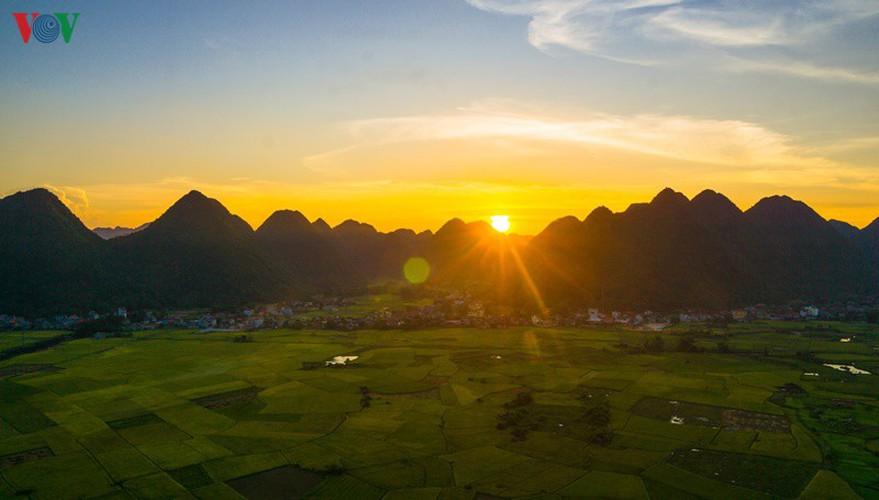 bac son rice fields turn yellow amid harvest season hinh 7