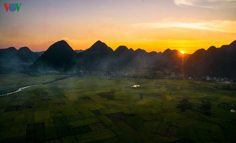bac son rice fields turn yellow amid harvest season hinh 8