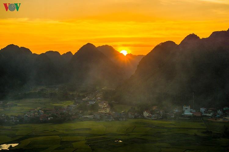 bac son rice fields turn yellow amid harvest season hinh 9