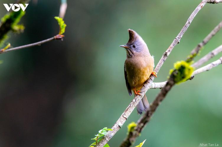 a close look at rare bird species in hoang lien national park hinh 1