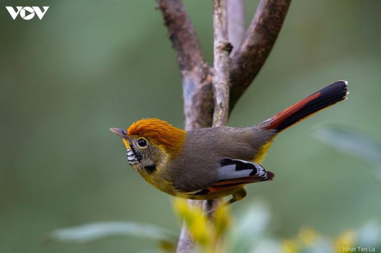 a close look at rare bird species in hoang lien national park hinh 2