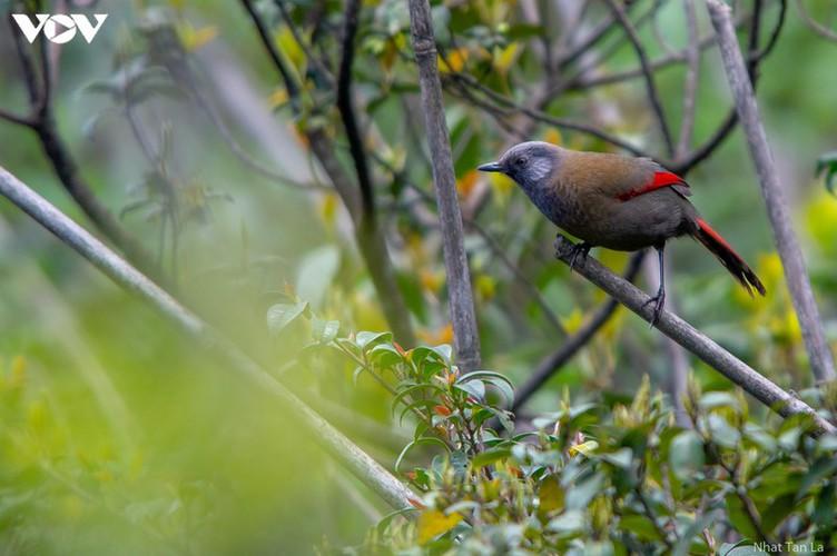 a close look at rare bird species in hoang lien national park hinh 4