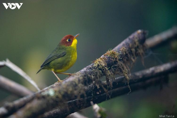 a close look at rare bird species in hoang lien national park hinh 5