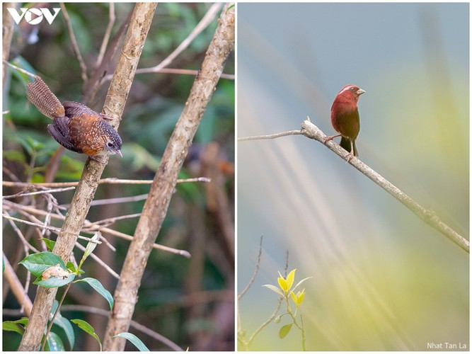 a close look at rare bird species in hoang lien national park hinh 6