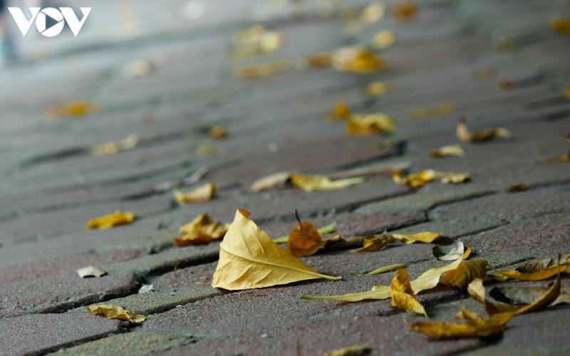 hanoi specialties during autumn months hinh 12