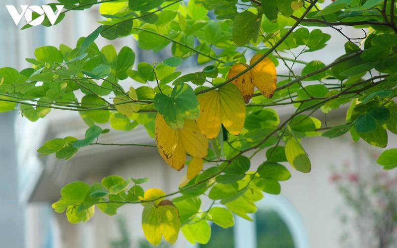 hanoi specialties during autumn months hinh 13