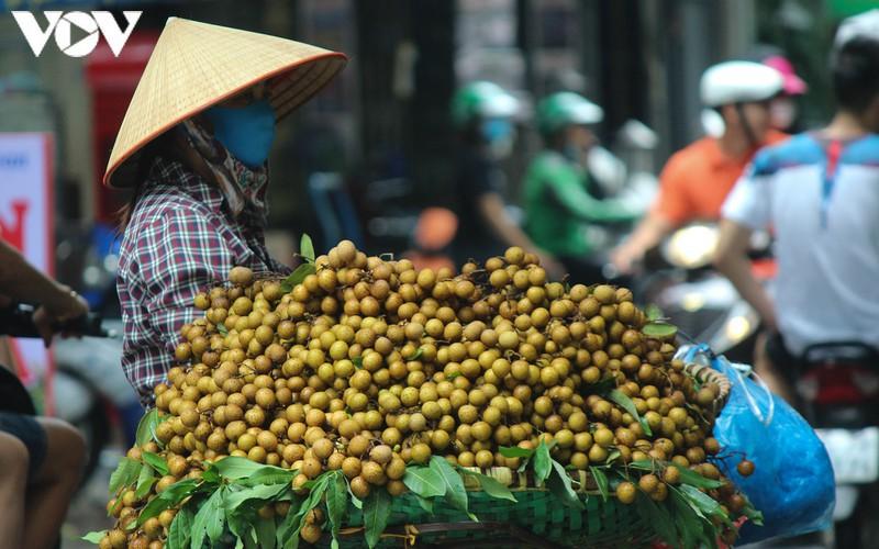 hanoi specialties during autumn months hinh 16
