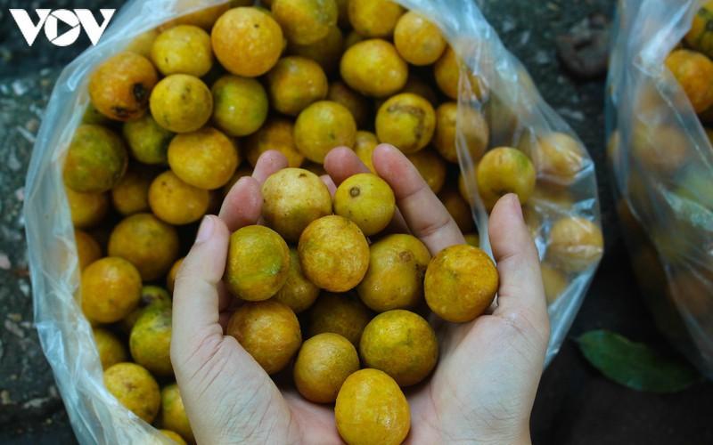 hanoi specialties during autumn months hinh 7