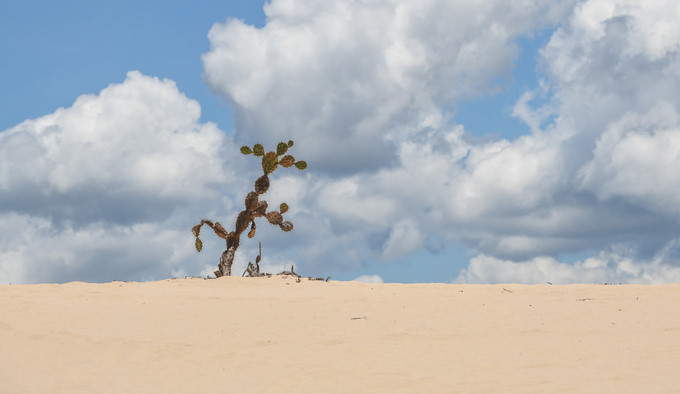 picturesque giant sand dunes of quy nhon hinh 6
