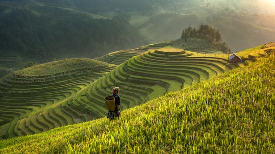 top spots to enjoy ripening rice fields in north-western region hinh 3