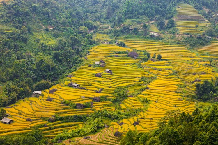 top spots to enjoy ripening rice fields in north-western region hinh 5