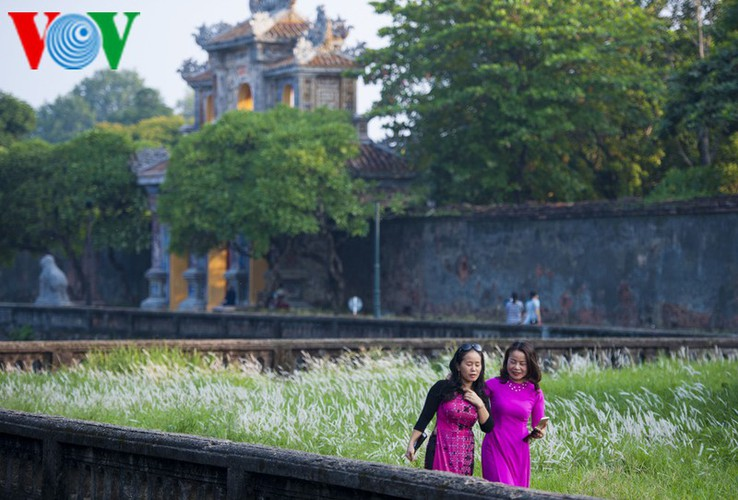 discovering vibrant white grass check-in points of hue city hinh 7