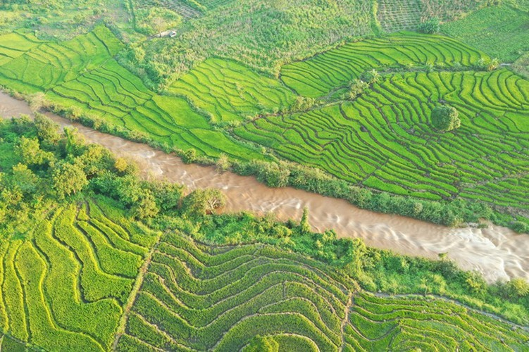 discovering terraced fields of chu se from height hinh 4