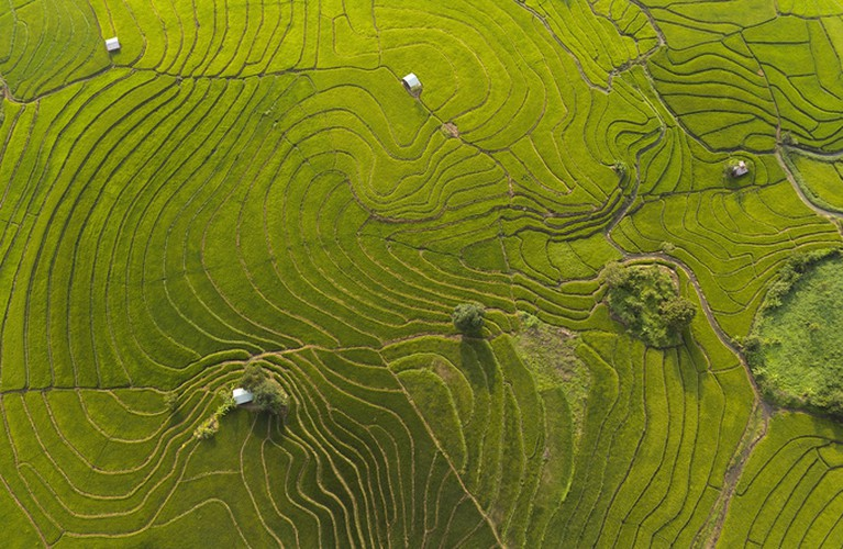 discovering terraced fields of chu se from height hinh 6