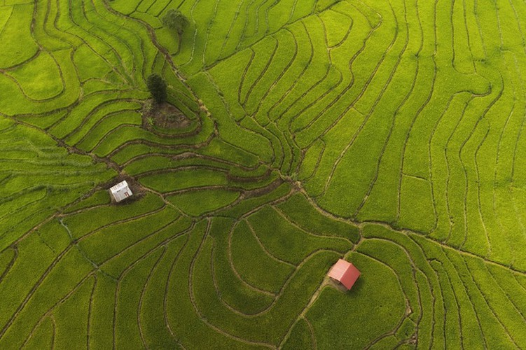 discovering terraced fields of chu se from height hinh 8