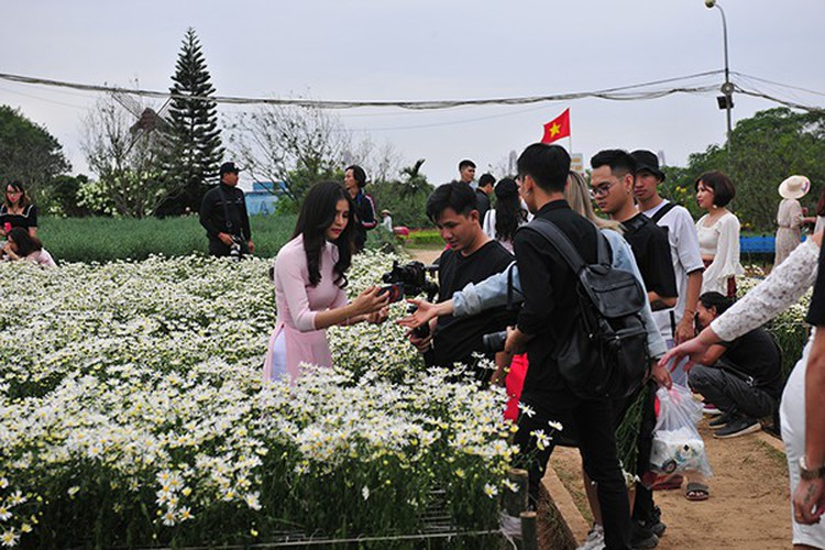 young people flock to witness ox-eye daisy gardens in hanoi hinh 2