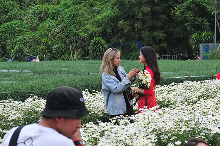 young people flock to witness ox-eye daisy gardens in hanoi hinh 3