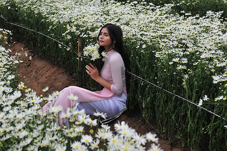 young people flock to witness ox-eye daisy gardens in hanoi hinh 4