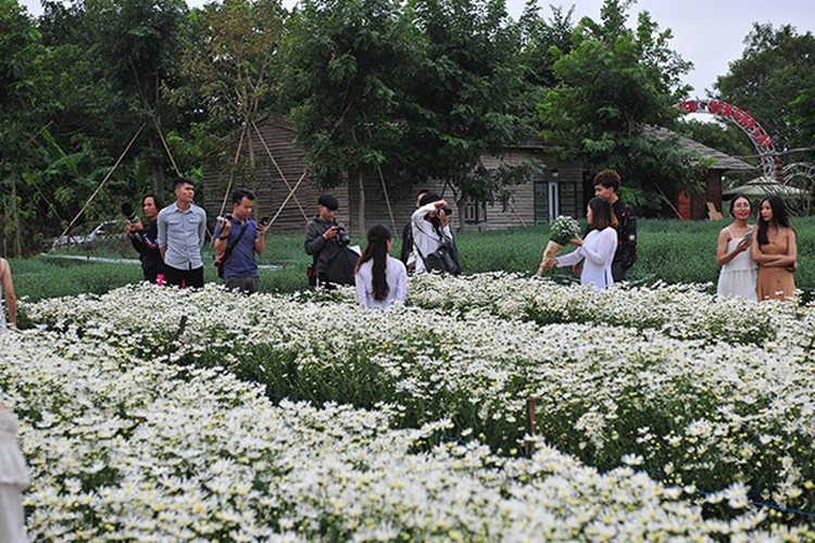 young people flock to witness ox-eye daisy gardens in hanoi hinh 5