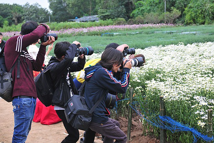 young people flock to witness ox-eye daisy gardens in hanoi hinh 6