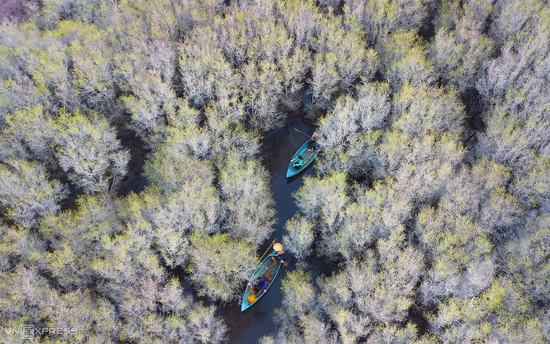 discovering bau ca cai mangrove forest in quang ngai hinh 2