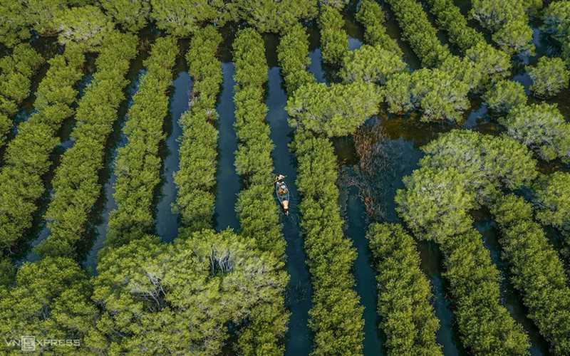 discovering bau ca cai mangrove forest in quang ngai hinh 3