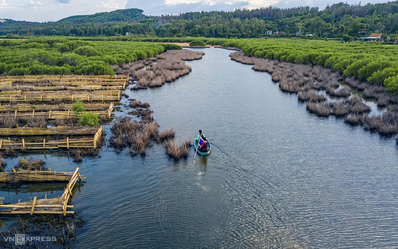 discovering bau ca cai mangrove forest in quang ngai hinh 5