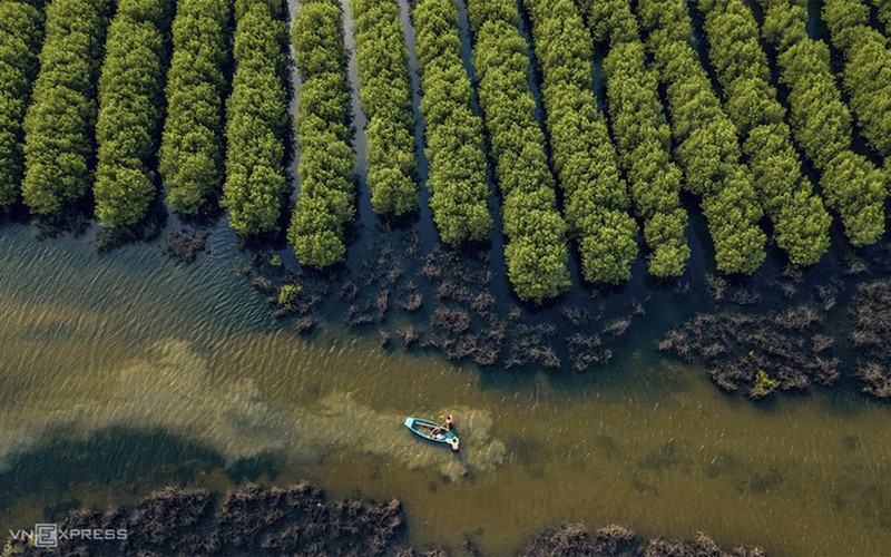 discovering bau ca cai mangrove forest in quang ngai hinh 7