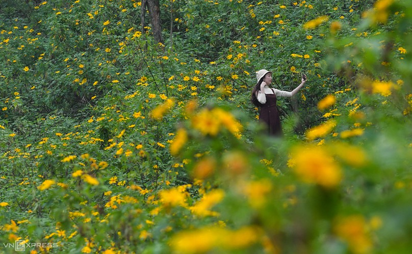 exploring wild sunflowers in bloom in ba vi national park hinh 6