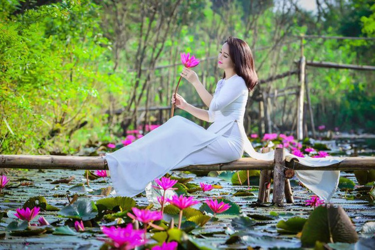 discovering stunning water lilies of yen stream hinh 11