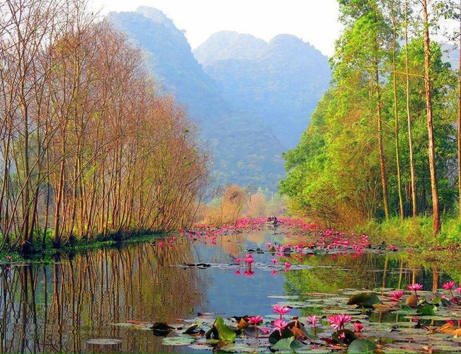 discovering stunning water lilies of yen stream hinh 1