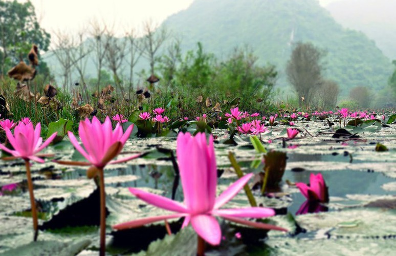 discovering stunning water lilies of yen stream hinh 3