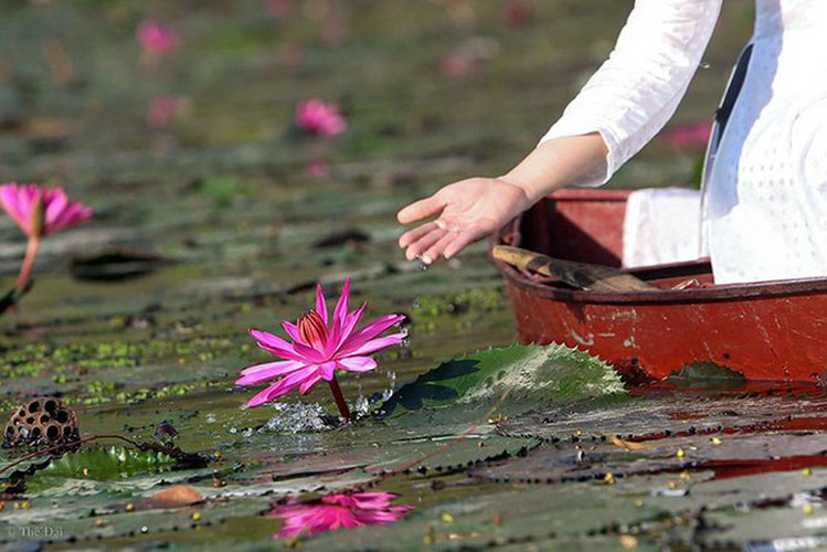discovering stunning water lilies of yen stream hinh 4