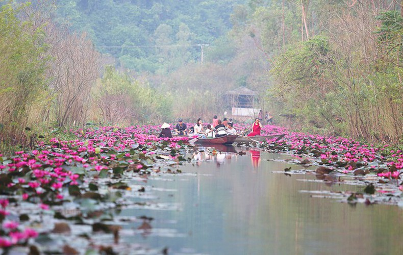 discovering stunning water lilies of yen stream hinh 6